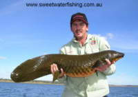 Queensland Lungfish